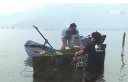 TT-Huế: Người nuôi thủy sản gặp khó vì chậm trễ bồi thường