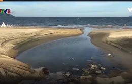 Ô nhiễm biển Đà Nẵng: Cần giải quyết từ gốc