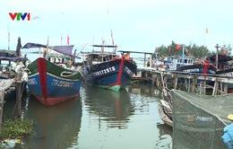 Cá nóc nhiều bất thường ở biển miền Trung