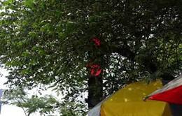 """Khi những biển báo giao thông """"núp"""" lùm cây"""
