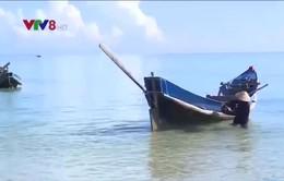 Môi trường sinh thái biển Bắc Trung Bộ đang hồi phục tích cực