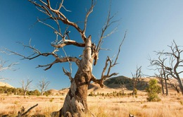 Mỹ đóng góp 500 triệu USD cho Quỹ Khí hậu xanh