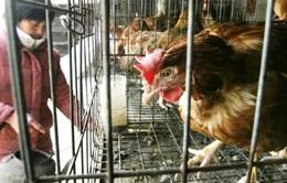 Trung Quốc phát hiện thêm các trường hợp nhiễm H7N9