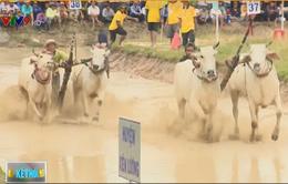 Khoảng 10.000 người tham dự lễ hội đua bò Bảy Núi, An Giang