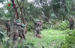 Lực lượng vũ trang Quảng Trị giúp dân khắc phục hậu quả bão số 10