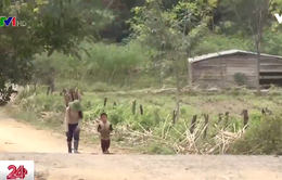 Nóng tình trạng trẻ em bị dụ dỗ bỏ học đi làm thuê xa
