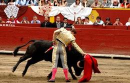 12 người bị thương trong lễ hội đua bò tót tại Peru
