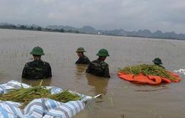 Ninh Bình, Thái Bình huy động lực lượng vũ trang giúp dân gặt lúa