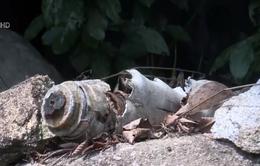 Phát hiện hàng trăm quả bom bi tại Quảng Ngãi