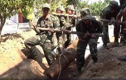 Khánh Hòa: Thu hồi một quả bom trong nhà dân tại huyện Diên Khánh