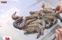 Triệt phá cơ sở bơm tạp chất vào tôm chết ở Hà Nội