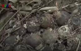 Quảng Ngãi: Thành lập hội đồng tiêu hủy bom tại núi Khỉ