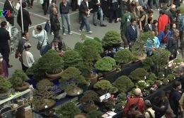 Hội chợ cây cảnh bonsai thế giới