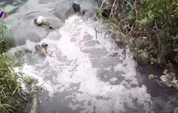 TP.HCM: Nước kênh đổi màu bốc mùi hóa chất