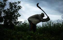 """Sốc với tình trạng """"nô lệ thời hiện đại"""" ở Brazil"""