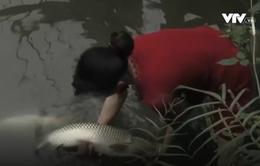 Vỡ đập thải mỏ thiếc ở Nghệ An gây cá chết hàng loạt