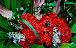 Độc đáo vườn bươm bướm trên đảo Hoa Lan ở Nha Trang