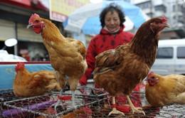 """Giá thịt gà """"gặp họa"""" vì dịch cúm H7N9"""