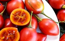 Cà chua thân gỗ giá 1 triệu đồng/kg hút người mua
