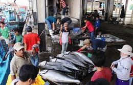 Tổng kết Nghị định 67 về chính sách phát triển thủy sản