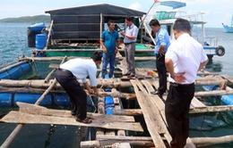 Nguyên nhân cá bớp chết tại Cà Mau