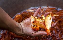 Làm giàu từ nghề nuôi cá chép vàng (17h20, VTV1)