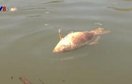 Quảng Nam: Phạt 94 triệu đồng nhà máy kẽm xả thải làm cá chết