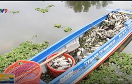 Bình Dương: Cá chết bất thường tại hồ thủy lợi Từ Vân 1