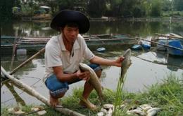 Cá chết trắng sông Bồ là do thiếu ôxy trong nước