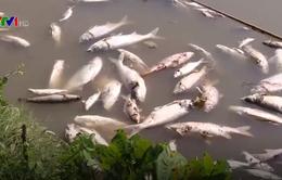 Cá chết bất thường tại huyện Đông Anh (Hà Nội)