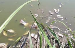 Cá chết, lúa cháy tại khu công nghiệp Quán Ngang, Quảng Trị