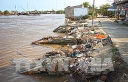 Cá chết ở Đầm Dơi, Cà Mau: Do nguồn nước bị ô nhiễm