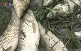Nghệ An hỗ trợ người dân thiệt hại do vỡ đập chứa bùn thải