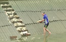 Cá chết hàng loạt ở Lào Cai do bục ống nước thải nhà máy