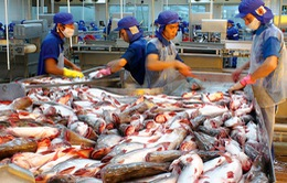 Yêu cầu mới với cá da trơn xuất khẩu