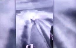 Clip dùng thuyền máy kéo lê cá mập gây phẫn nộ trên mạng xã hội