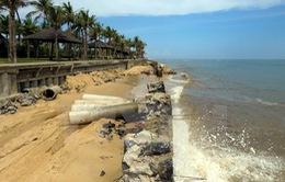 Cà Mau mất khoảng 450ha đất ven biển mỗi năm