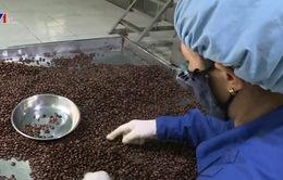 Ấn Độ gỡ bỏ lệnh cấm nhập khẩu một số nông sản Việt Nam