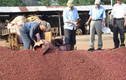 Công bố chương trình hỗ trợ phát triển cà phê Buôn Ma Thuột