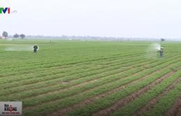 Hải Dương nâng cao chất lượng củ cà rốt, tìm hướng xuất khẩu sang Nhật, Mỹ