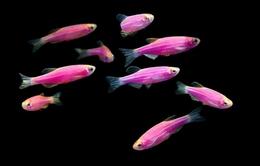 Phát hiện loài cá cũng có các trạng thái cảm xúc