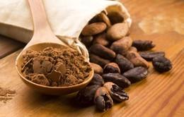 Biến động mạnh trên thị trường cacao thế giới