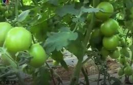 Đẩy mạnh kết nối chuỗi nông sản an toàn