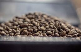 Brazil cho phép nhập khẩu cà phê Robusta từ Việt Nam