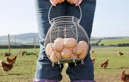 """Nông dân Hà Lan điêu đứng vì trứng """"bẩn"""""""