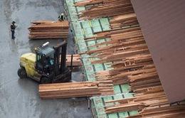 Canada hỗ trợ ngành công nghiệp gỗ xẻ