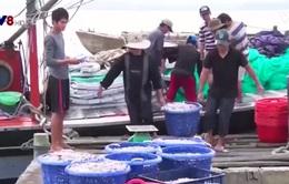 Ngư dân Quảng Trị phấn khởi được mùa cá