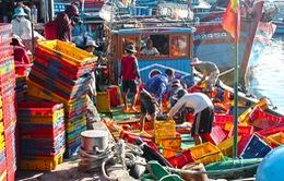 Cảng cá Thọ Quang tấp nập ngày đầu năm