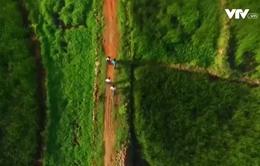 Hoang sơ cánh đồng cói vùng đầm vịnh Ô Loan