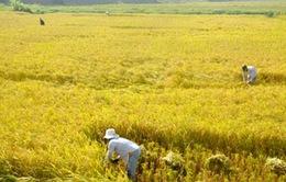 Quảng Nam: Miễn thủy lợi phí gần 86.000ha đất sản xuất nông nghiệp
